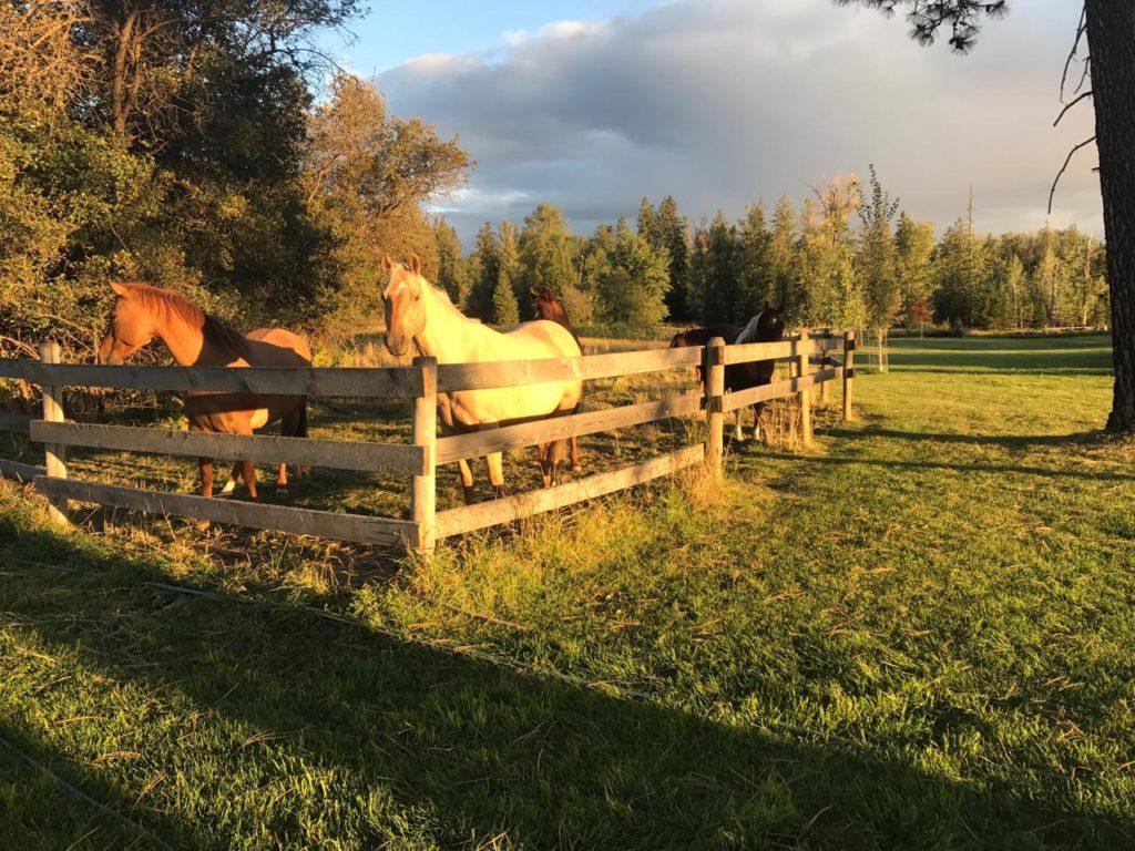 Horses at Gunderson Gulch